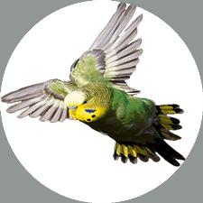 Vogel Futter und Käfige