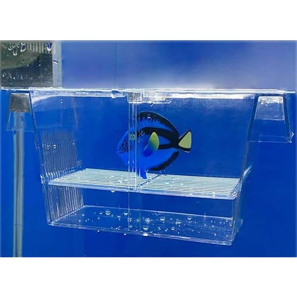 ablaichkasten aquarium zuchtkasten fische