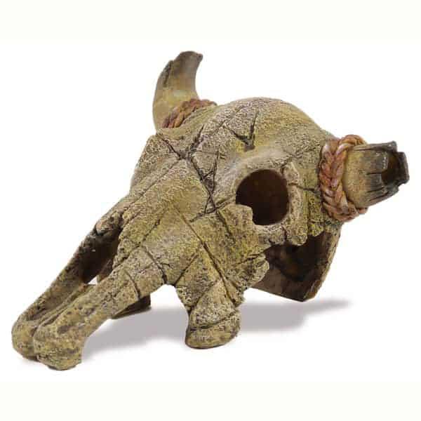 amazonas bueffelschaedel buffalo skull