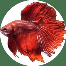 Fisch Aquarium Zubehör
