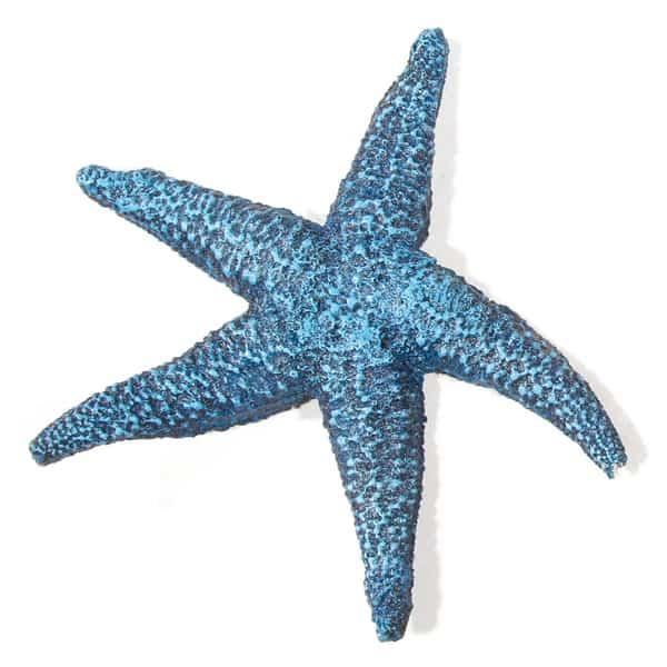 aquarium seestern deko blau