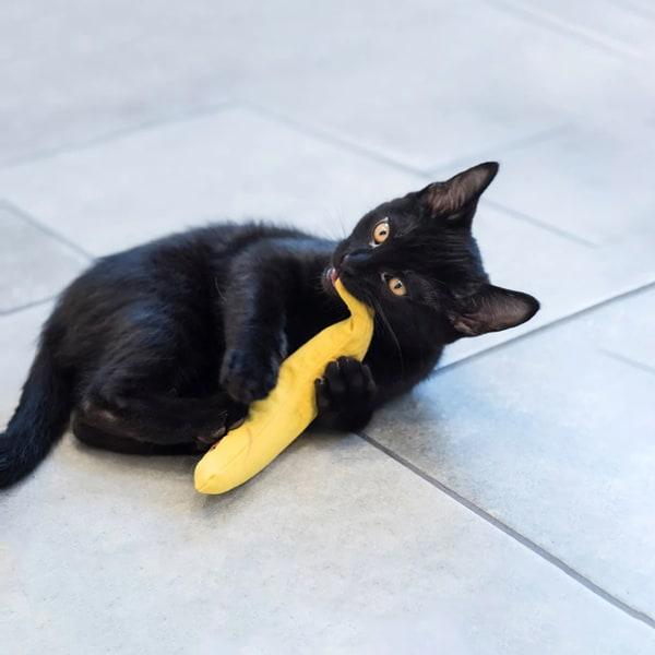 banane yeowww mit catnip bestellen