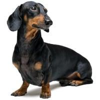 dackel hundefutter