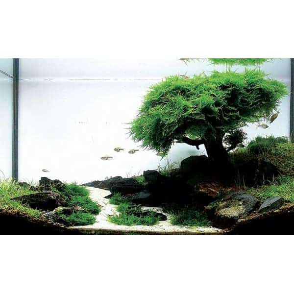 dennerle nano aquasaping set mini aquarien