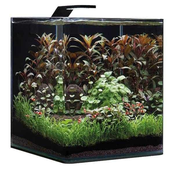dennerle nano cube 30 l basic aquarium