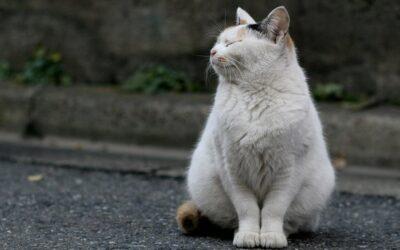 Ab wann ist meine Katze dick?