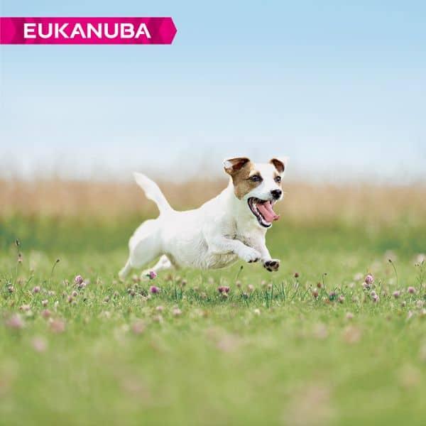 eukanuba thriving mature kleine hunderassen
