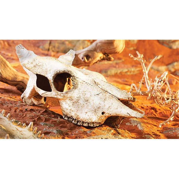 exo terra bueffel schaedel buffalo skull
