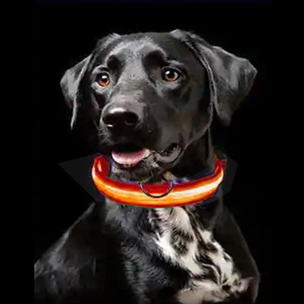 hunde leuchthalsband led swisspet