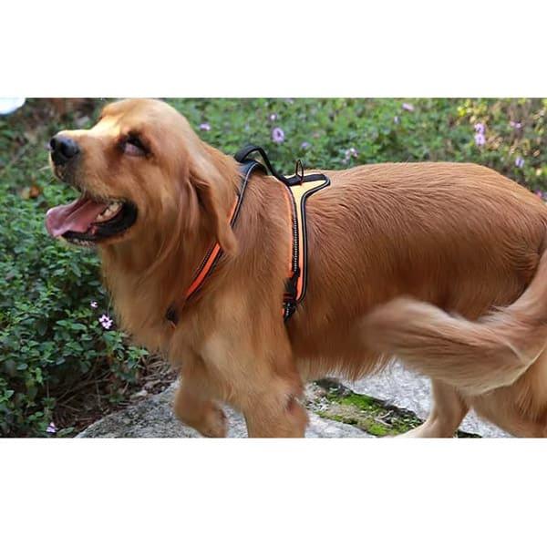 hundegeschirr orange grosse hunde