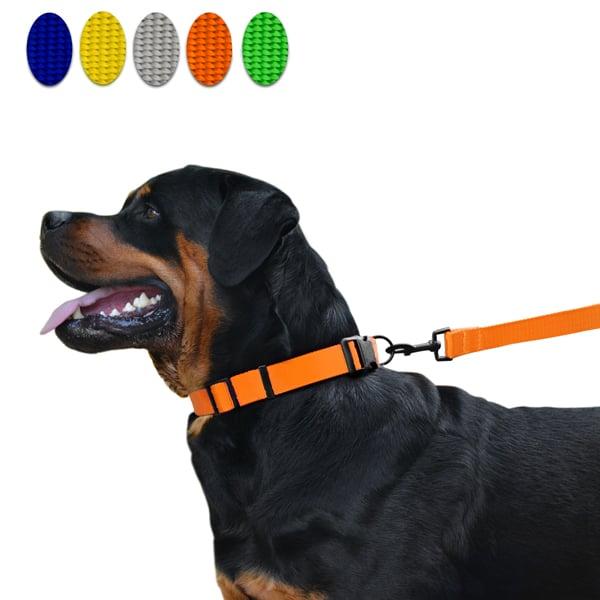 hundehalsband hundeleine klassisch strong
