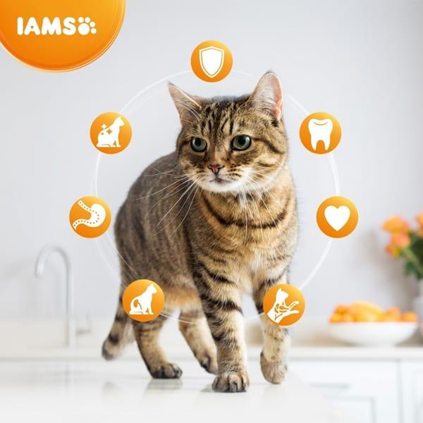 iams sterilisierte katzenfutter trocken