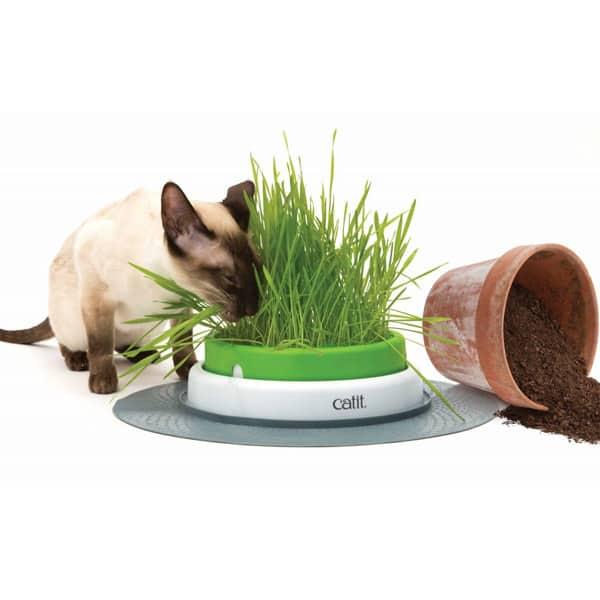 katzengras catit kaufen schweiz