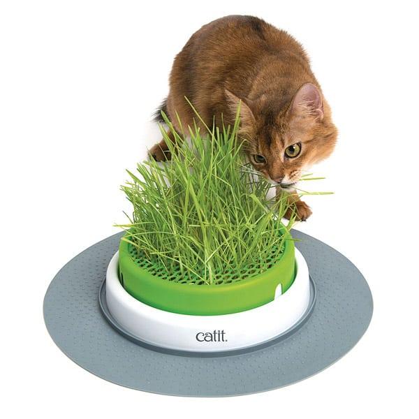 katzengras catit senses grass planter
