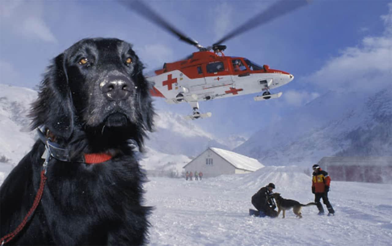 Lawinenhund bei Rettung Menschen