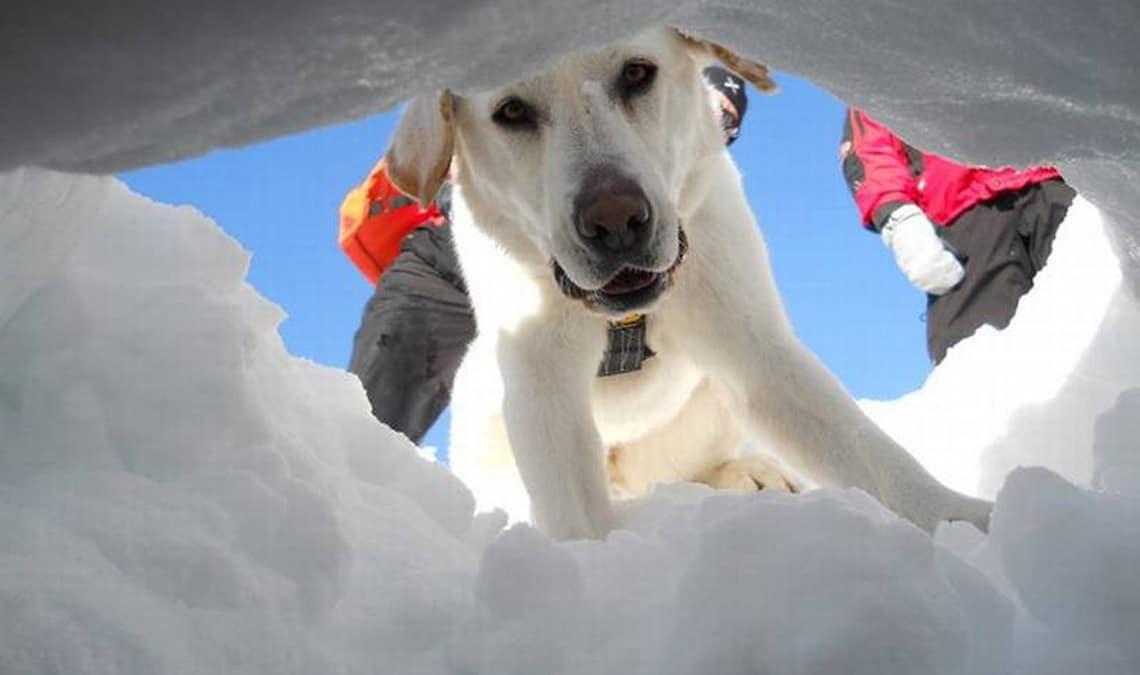 Lawinenhunde und Rettungshunde Schweiz