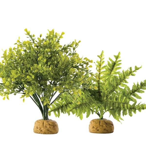 regenwald pflanze terrarium pflanze