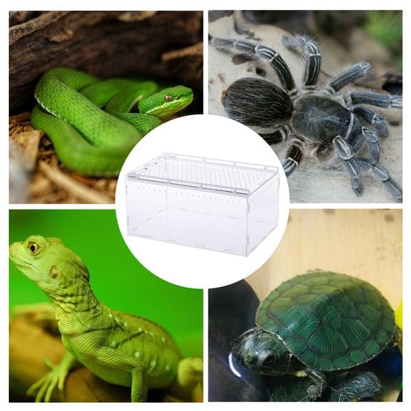 reptilien brutbox transportbox