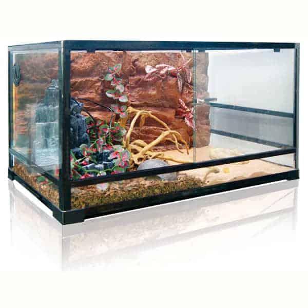 reptilien terrarium kaufen schweiz