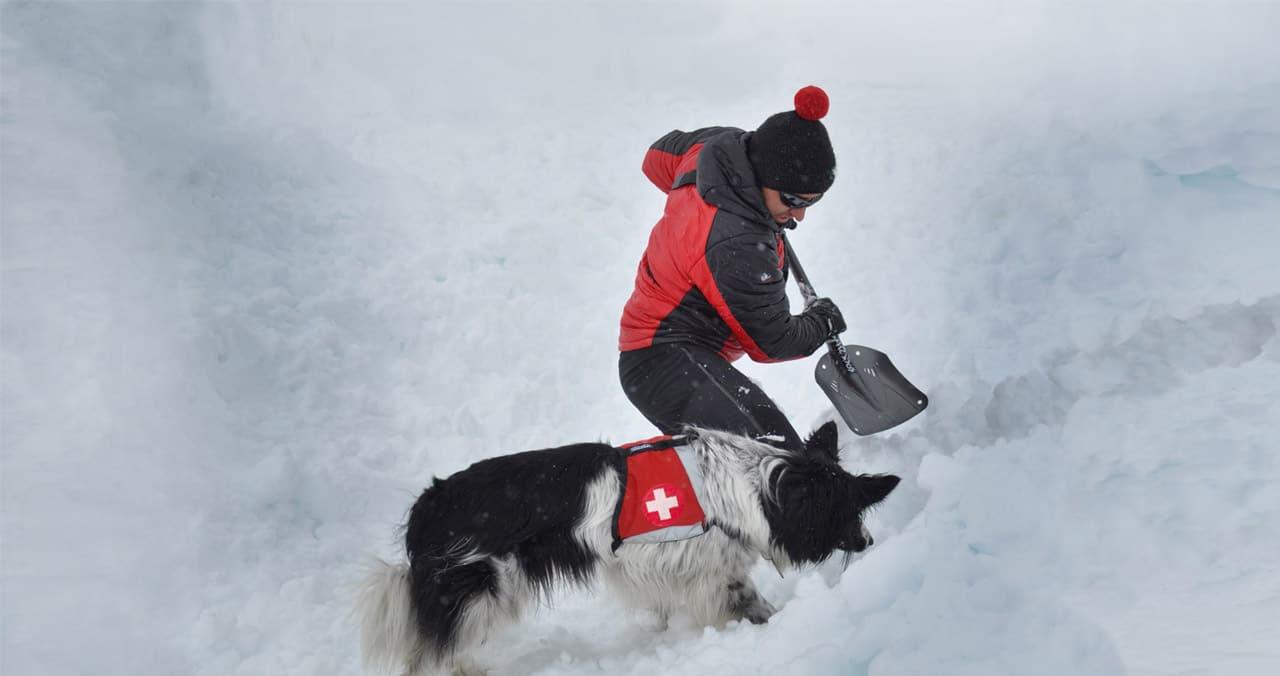 Lawinenhund im Einsatz Schnee Rettung Hunde