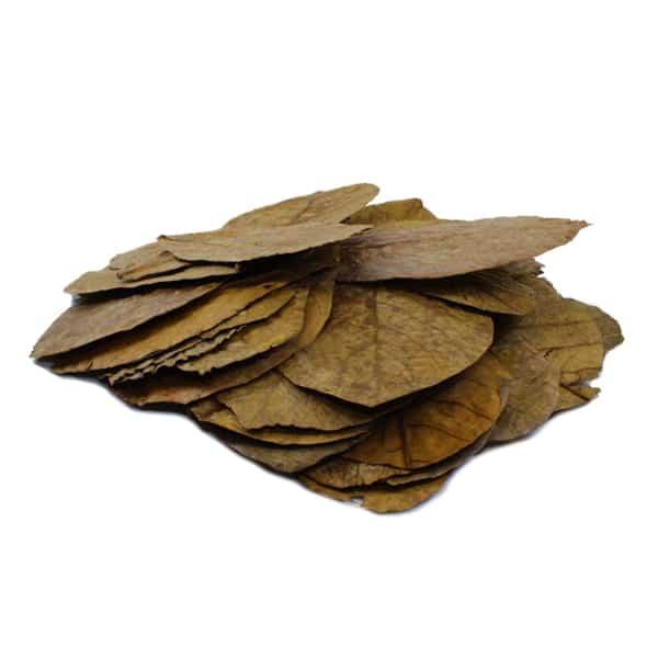 seemandelbaumblaetter dennerle catappa leaves