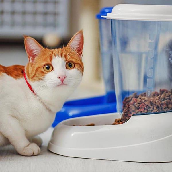 spender katzenfutter kaufen
