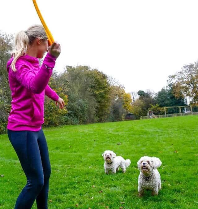 Hunde Erziehung durch spielen einfach gemacht!