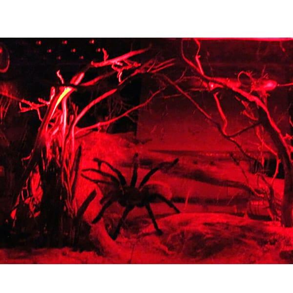 terrarium lampe exo terra infrarot
