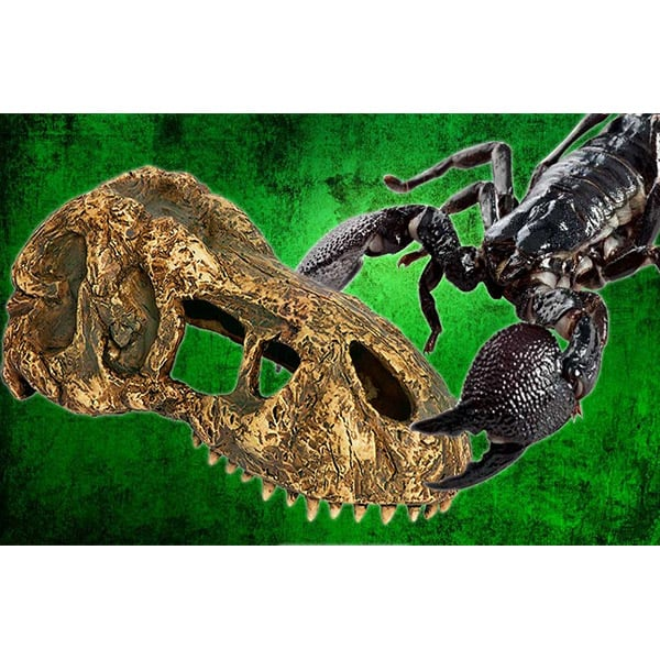 terrarium totenkopf t-rex