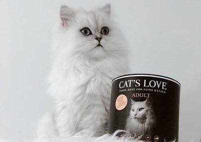 trockenfutter cats love
