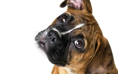 10 Dinge die Hunde hassen